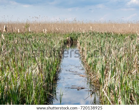 channel through reed comana delta on neajlov river giurgiu romaania