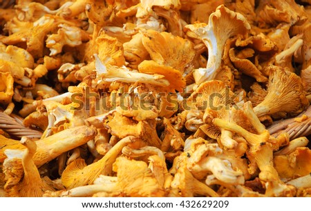 Chanterelle mushrooms in wicker basket for sale at local organic market in Paris (France).  - stock photo