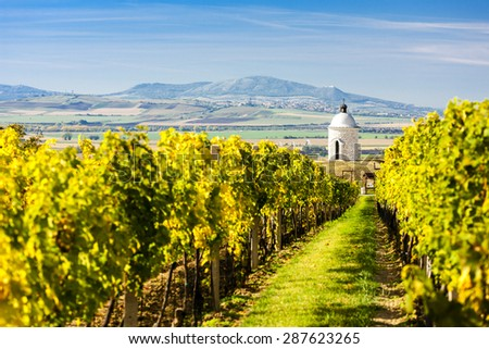 chapel with vineyard near Velke Bilovice, Czech Republic - stock photo