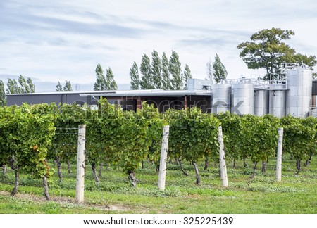 Chardonnay Vines and Fermenting Tanks in a Winery - stock photo