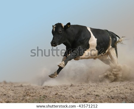 Charging Bull isolated with partial clipping path