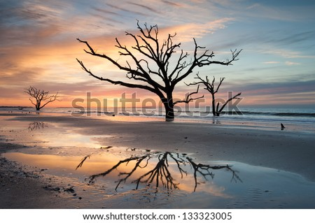 Charleston Botany Bay Boneyard Beach Edisto Island Tree in Surf - stock photo