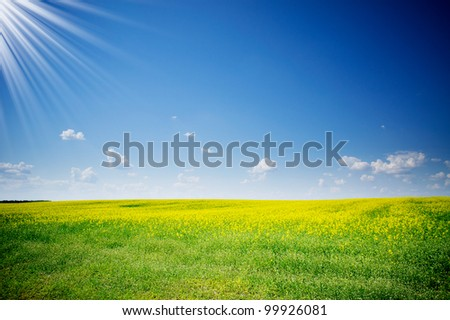 Charm rapefield and cloudscape with sunbeams. - stock photo