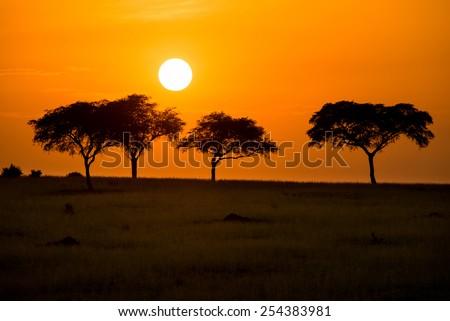 Charming African morning in Murchison Falls National Park, Uganda - stock photo