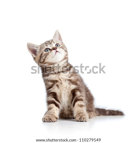 charming cat kitten looking up - stock photo