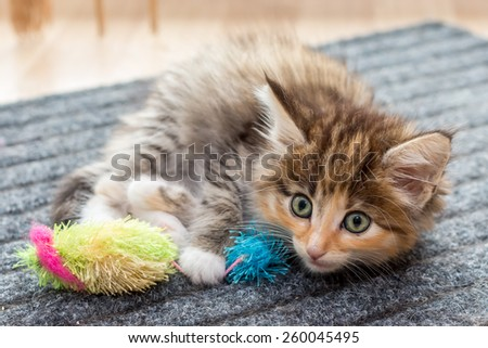 Charming fluffy kitten with  cat's toy - stock photo