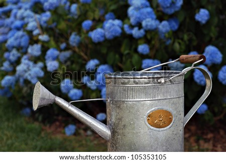 Charming old fashioned watering can with beautiful blue hydrangea bushes in soft focus as background.  Closeup with shallow dof. - stock photo