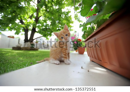 charming red kitty outdoors