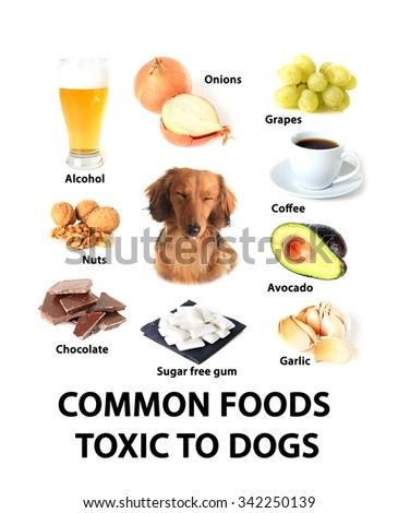 Chart of common foods toxic to dogs.  - stock photo