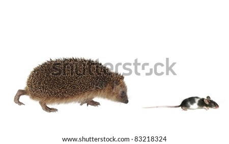 chasing mouse hedgehog on white background - stock photo