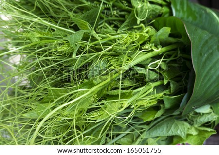 Chayote, fresh green vegetable, that is good for cooking  - stock photo