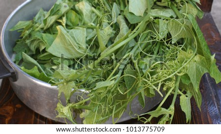 Chayote shoots, Sechium edule, Cucurbitaceae for cooking.