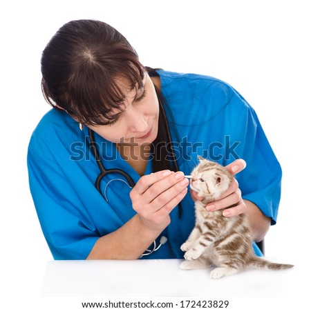 checking eyes of cat in veterinary clinic. isolated on white background - stock photo