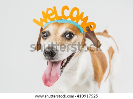 cheerful dog with the words welcome on the head. Pet friendly smile. Cheerful laughter. idea for the card Guest Invitation. Cool happy pup on gray ( grey ) background - stock photo