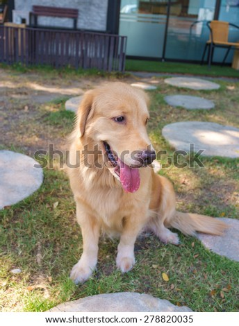 cheerful golden retriever sitting in dog park - stock photo