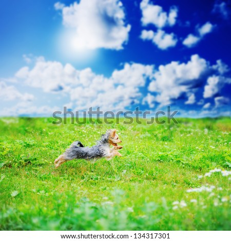 Cheerful little dog playing in the park - stock photo
