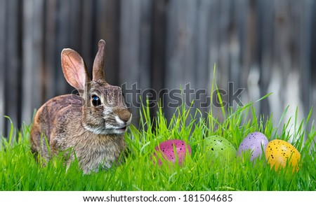 Cheerful looking Bunny and colorful Easter eggs in the grass. Copy space. - stock photo