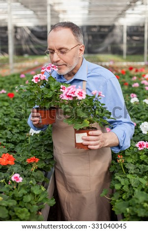 Cheerful old florist is holding two flowerpots at greenhouse. He is smelling flower with pleasure and smiling. The man is standing in apron - stock photo