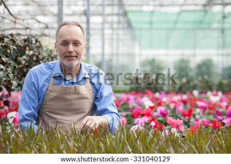 Cheerful senior gardener is working at greenhouse with pleasure. He is standing near plant and smiling. The man is looking at camera happily. Copy space in right side - stock photo