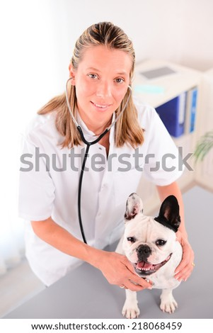 cheerful young blonde veterinary taking care of a beautiful pet dog french bulldog  - stock photo