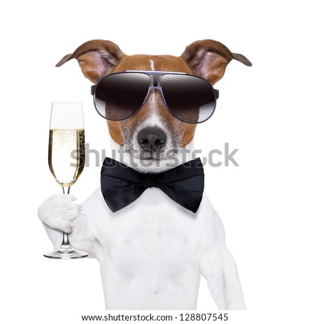 cheers dog with  a glass of champagne - stock photo