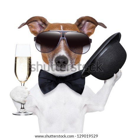 cheers dog with  a glass of champagne and a black hat - stock photo