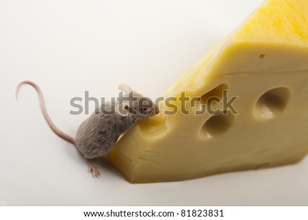 Cheese and mouse - stock photo