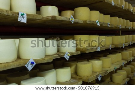 Cheese production cellar. Hard cheeses. Cheese heads on wooden shelves