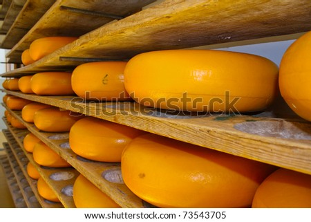 Cheese rack in refining in Gouda - stock photo