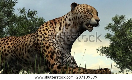 Cheetah on nature background
