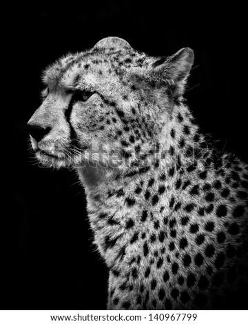 Cheetah Portrait - stock photo