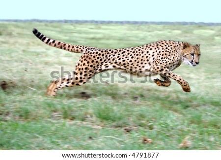Cheetah running on open plain