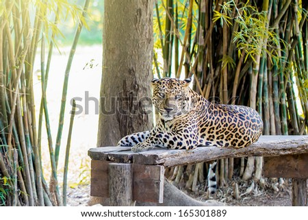 Cheetahs in the forest - stock photo