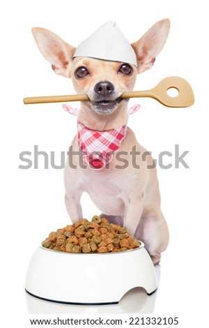 chef cook chihuahua dog with a food bowl holding a cooking spoon in mouth , isolated on white background - stock photo