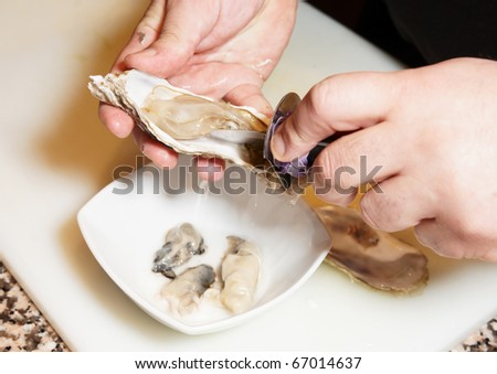 Chef is opening oysters - stock photo