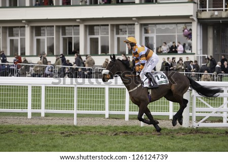 CHELTENHAM, GLOUCS-JANUARY 26: Jockey Andrew Tinkler takes Hell's Bay out to the third race at Festival Trials Day, Cheltenham Racecourse, Cheltenham UK on Jan 26, 2013. - stock photo