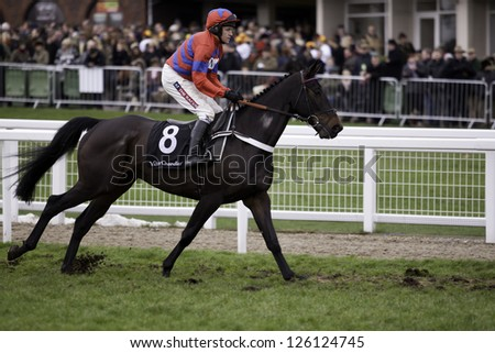 CHELTENHAM, GLOUCS-JANUARY 26: Jockey Barry Geraghty takes Sprinter Sacre to the start in the fourth race at Festival Trials Day, Cheltenham Racecourse, Cheltenham UK on Jan 26, 2013. - stock photo