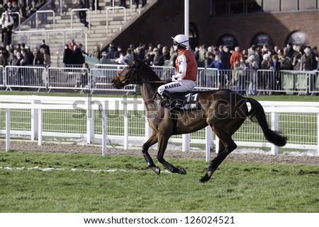 CHELTENHAM, GLOUCS-JANUARY 26: Jockey Sam Thomas rides with Benny's Mist out to the second race at Festival Trials Day, Cheltenham Racecourse, Cheltenham UK on Jan 26, 2013. - stock photo