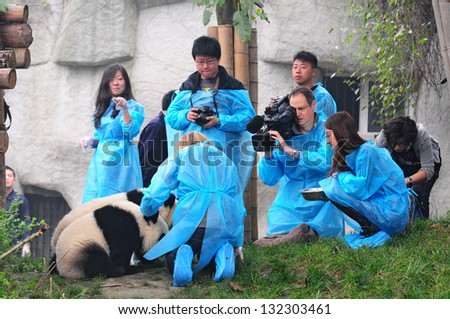 CHENGDU - MAY 6: Foreign and Chinese media film the first panda twins born last year on May 6, 2012 in Chengdu, China. Pandas are endangered species and only about 1,600 live around the world today. - stock photo