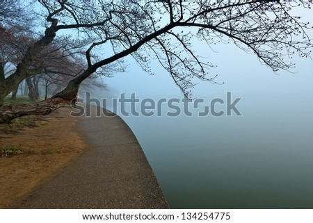 Cherry blossom and fog around Tidal Basin, Washington DC, United States - stock photo