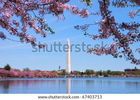 Cherry blossom and Washington monument over lake, Washington DC. - stock photo