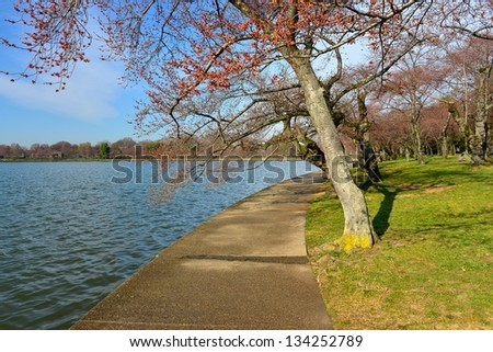 Cherry blossom around the Tidal Basin, Washington DC, United States - stock photo