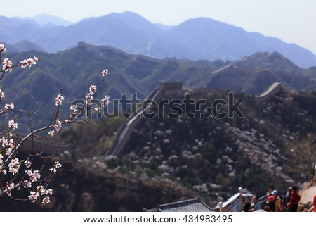Cherry blossom at the great wall of China - stock photo