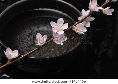Cherry blossom branch in vase - stock photo