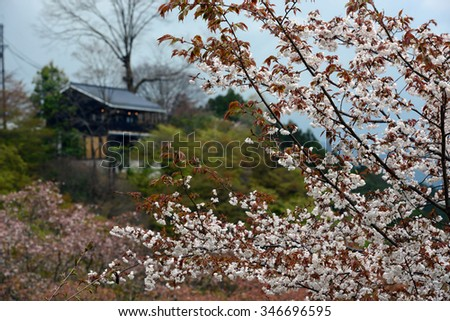 Cherry Blossom during Hanami Festival in Yoshino, Nara Prefecture, Kansai, Japan, is part of a UNESCO World Heritage site known as Sacred Sites and Pilgrimage Routes in the Kii Mountain Range.