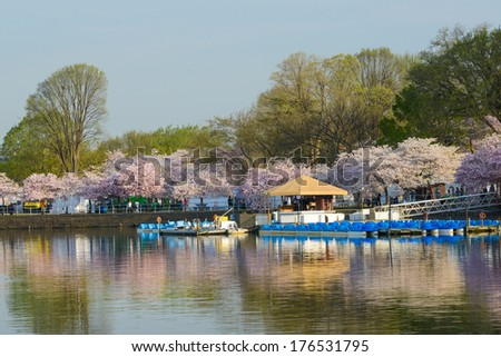 Cherry Blossom Festival in Tidal Basin - Washington DC - United States - stock photo