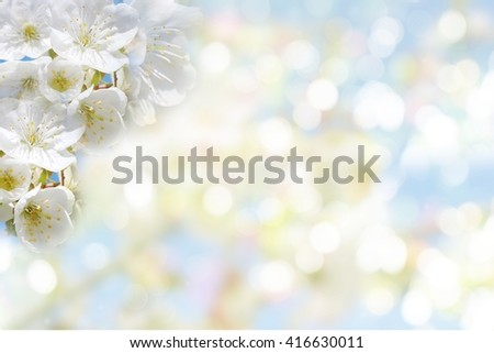 cherry blossom flower over soft abstract nature blur bokeh in pastel color background with copy space