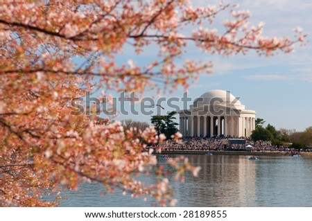 Cherry Blossom in Washington DC, Jefferson Memorial in the background