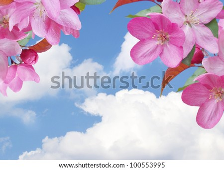 Cherry blossom on the sky background - stock photo