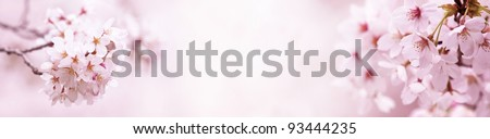 Cherry blossom, title bar background. Made in horizontal long dimension, for easy use in title bars. - stock photo